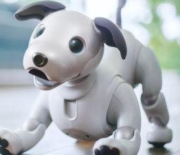 Aibo: per il cane robot di Sony un nuovo modello da quasi 3000 dollari